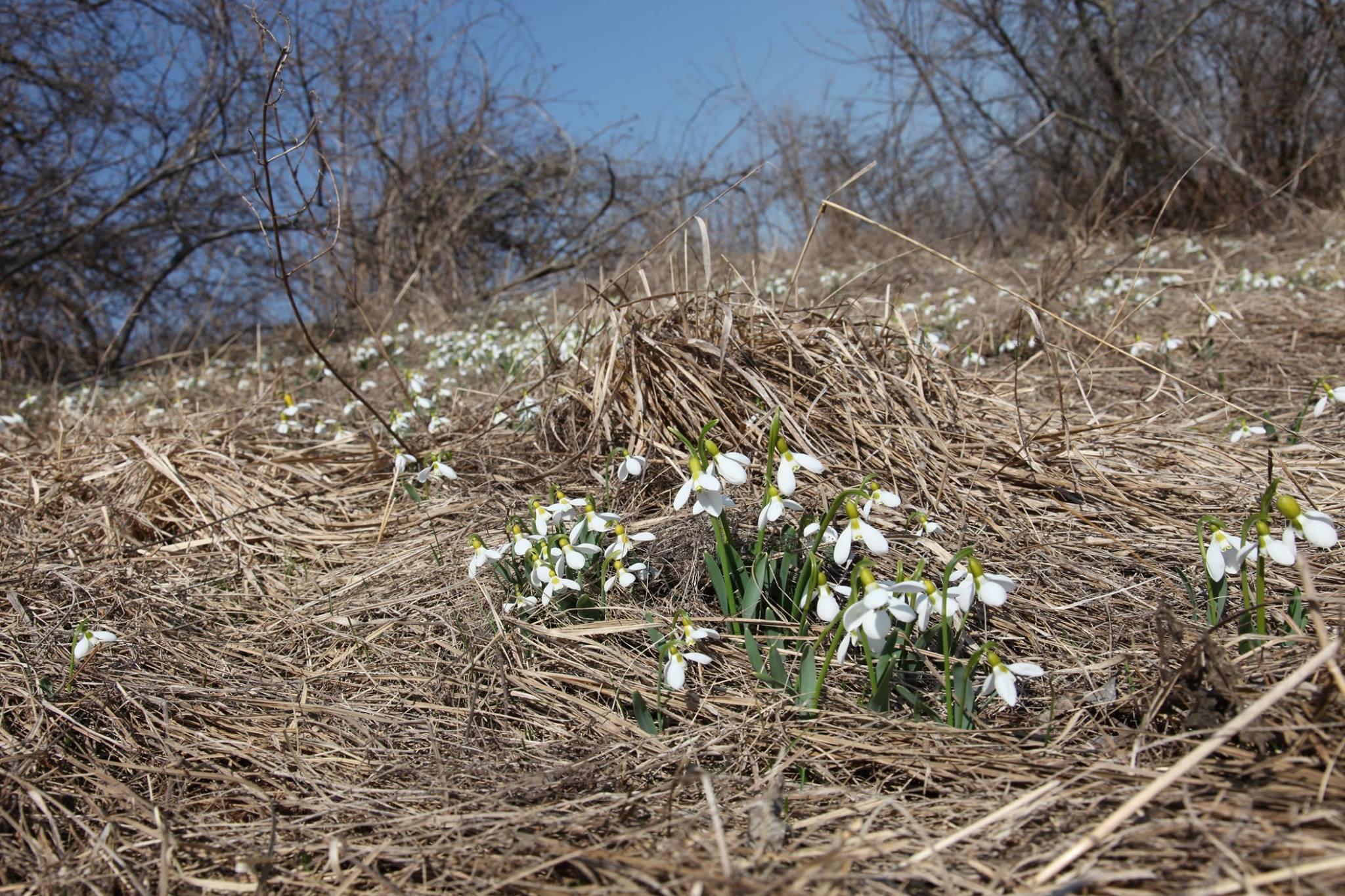 того, дыхание весны фото проживаете